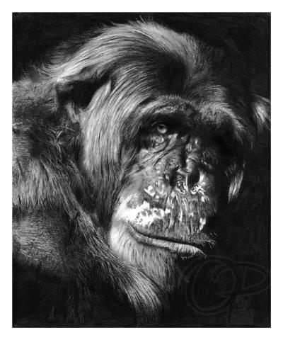 Chimp by Lisandro Pena